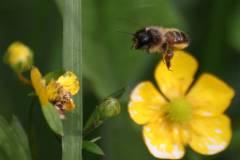 Insekten/Weichtiere