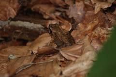 Amphibien/Reptilien