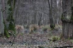 Feuchtgebiet